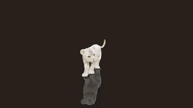 пет львенок